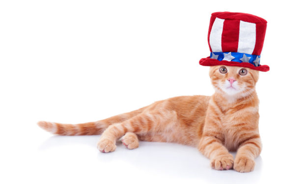 DemoCAT Voter? Cat Dead for 12 Years Receives Voter Registration Application by Mail